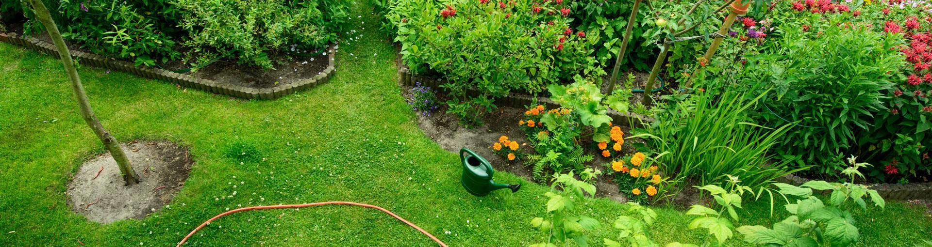 Baner ogród trawnik